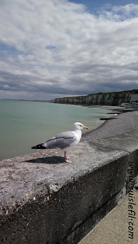 seagull at St Valéry